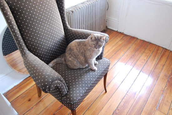 Dottedwingchair